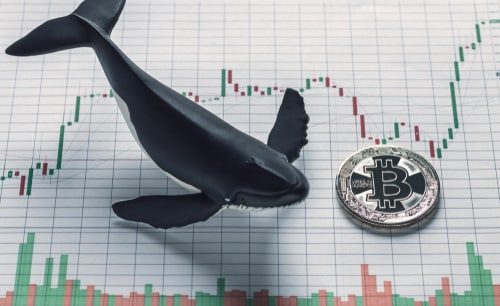 Whales investors